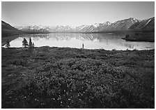 Tundra in summer with wildflowers and Twin Lake shore. Lake Clark National Park ( black and white)