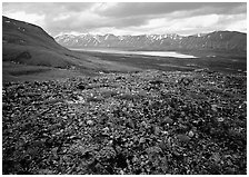 Tundra with blue forget-me-nots and Twin Lakes. Lake Clark National Park ( black and white)