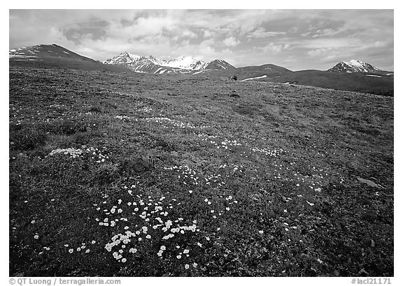 Green tundra slopes with alpine wildflowers and mountains. Lake Clark National Park (black and white)