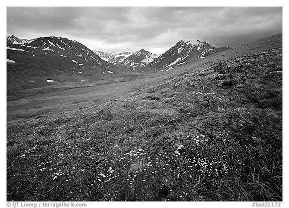 Wildflowers, valley and mountains. Lake Clark National Park (black and white)