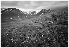 Wildflowers, valley and mountains. Lake Clark National Park ( black and white)
