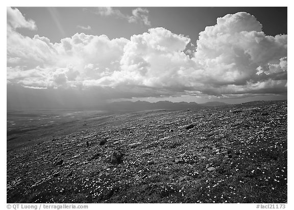 Tundra, wildflowers, and puffy white storm clouds. Lake Clark National Park (black and white)