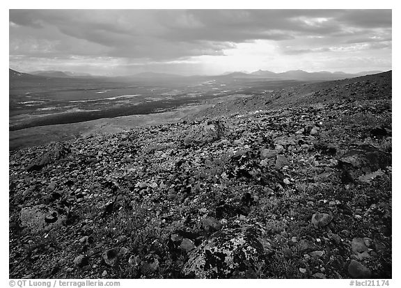 Tundra with forget-me-nots and Twin Lakes. Lake Clark National Park (black and white)