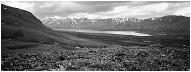 Tundra flowers with distant lake and mountains. Lake Clark National Park (Panoramic black and white)