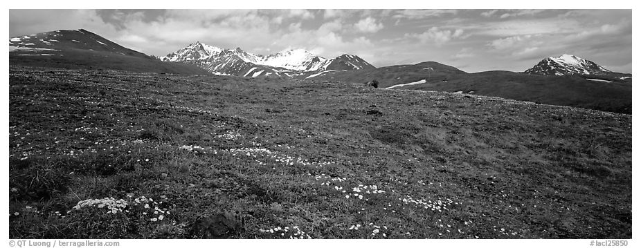 Wildflowers, tundra, and mountains. Lake Clark National Park (black and white)