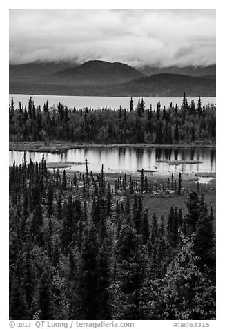 Forest in fall foliage, Beaver Pond and Lake Clark. Lake Clark National Park (black and white)