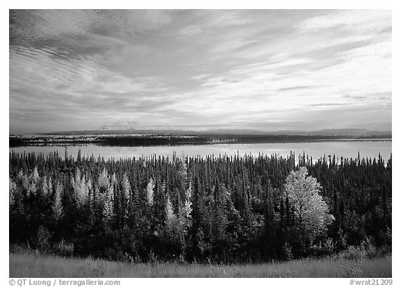 Forest, Willow Lake, and Wrangell range in the distance. Wrangell-St Elias National Park (black and white)