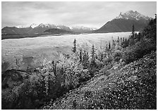 Late wildflowers, trees in autumn colors, and Root Glacier. Wrangell-St Elias National Park ( black and white)