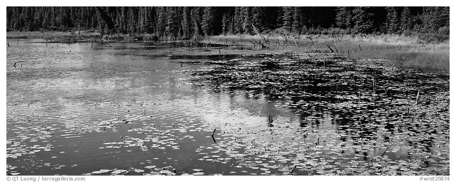 Pond with aquatic plants and reflections. Wrangell-St Elias National Park (black and white)
