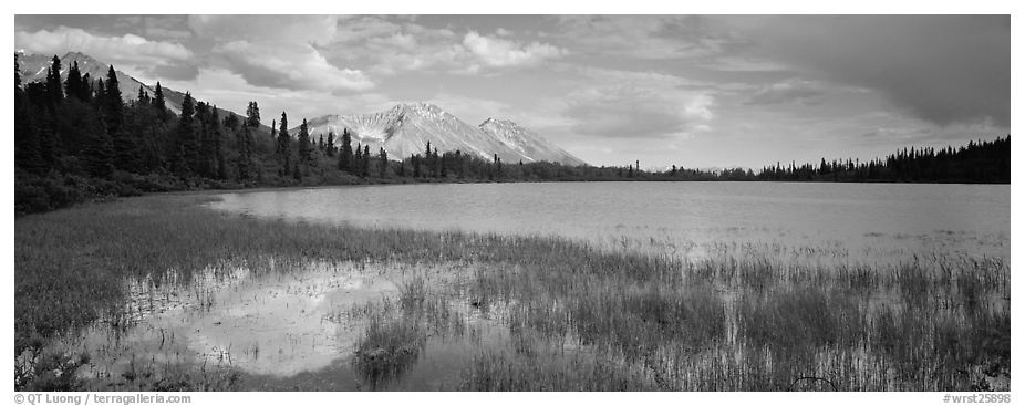 Reeds, pond, and mountains with open horizon. Wrangell-St Elias National Park (black and white)