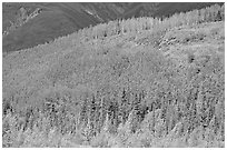 Forested hill. Wrangell-St Elias National Park, Alaska, USA. (black and white)