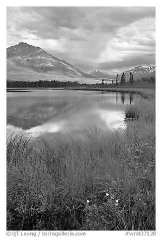 Flowers, grasses, lake, and mountains. Wrangell-St Elias National Park (black and white)