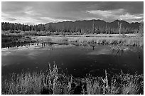 Pond and swamp with dark water. Wrangell-St Elias National Park ( black and white)