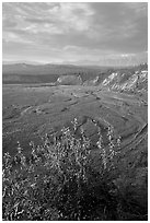 Fireweed, Kotsina river plain, and bluffs. Wrangell-St Elias National Park ( black and white)