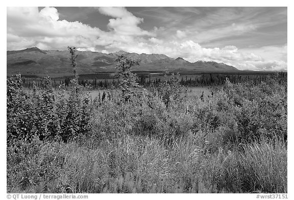 Lowland tundra, and Mentasta Mountains. Wrangell-St Elias National Park (black and white)