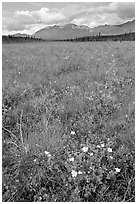 Meadow with tussocks and wildflowers. Wrangell-St Elias National Park ( black and white)