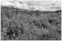 Tundra in summer and Nutzotin Mountains. Wrangell-St Elias National Park ( black and white)
