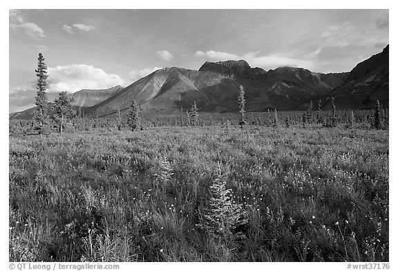 Meadow and Skokum Volcano. Wrangell-St Elias National Park (black and white)