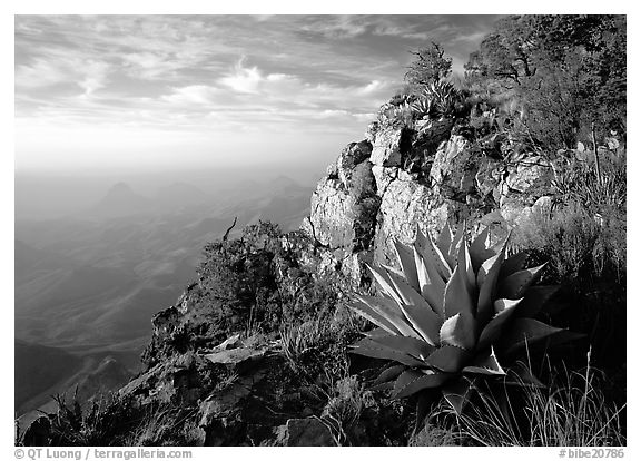 Agave and cliff, South Rim, morning. Big Bend National Park (black and white)