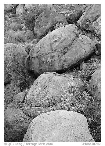 Boulders and wildflowers. Big Bend National Park (black and white)