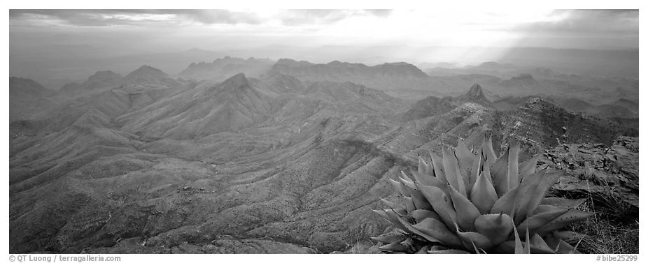 Century plant and desert mountains from South Rim. Big Bend National Park (black and white)
