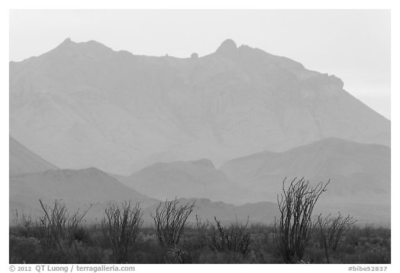 Ocotillo and Chisos Mountains. Big Bend National Park (black and white)