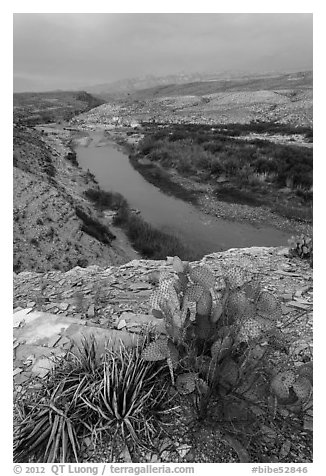 Cactus and Rio Grande Wild and Scenic River. Big Bend National Park (black and white)