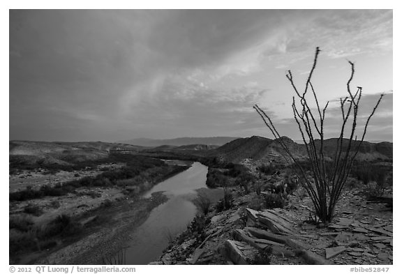 Ocotillo and Rio Grande Wild and Scenic River. Big Bend National Park (black and white)