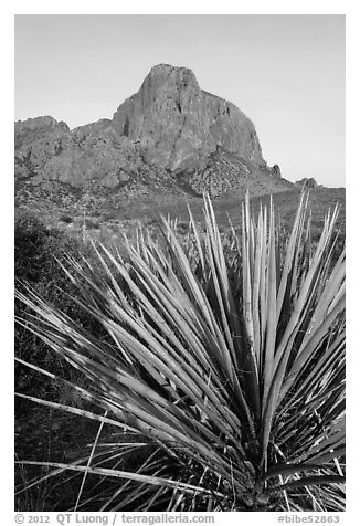 Sotol rosette and Chisos Mountains. Big Bend National Park (black and white)