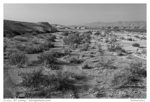 Dry riverbed. Big Bend National Park (black and white)