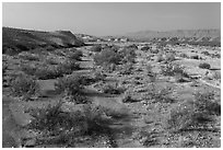 Dry riverbed. Big Bend National Park, Texas, USA. (black and white)