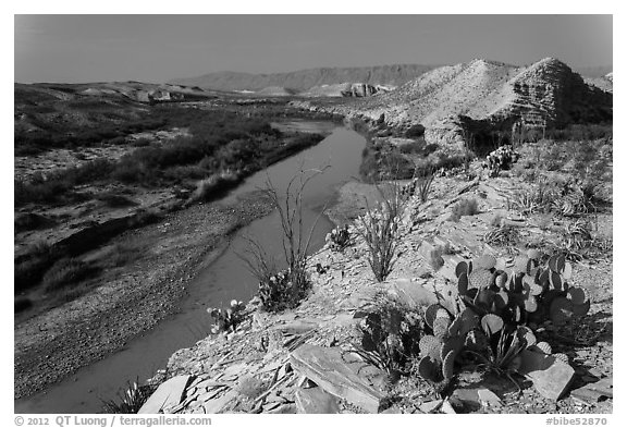 Cactus and Rio Grande River, morning. Big Bend National Park (black and white)