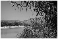 Vegetation on banks of Rio Grande River. Big Bend National Park ( black and white)