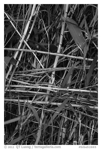 Riverbank plants close-up. Big Bend National Park (black and white)