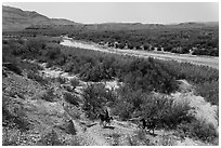 Mexican nationals crossing border on horse. Big Bend National Park, Texas, USA. (black and white)