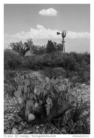 Cactus, windmill, and cottonwoods, Dugout Wells. Big Bend National Park (black and white)