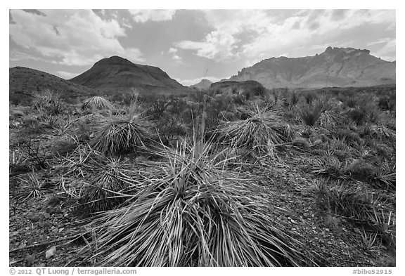 Chihuahuan desert in drought. Big Bend National Park (black and white)