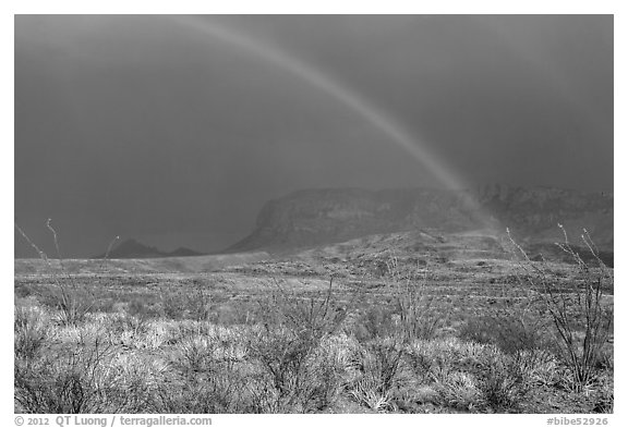 Double rainbow and ocotillos. Big Bend National Park (black and white)