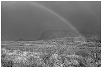 Double rainbow and ocotillos. Big Bend National Park, Texas, USA. (black and white)