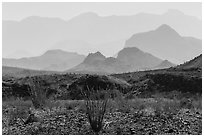 Desert and hazy Chisos Mountains. Big Bend National Park, Texas, USA. (black and white)