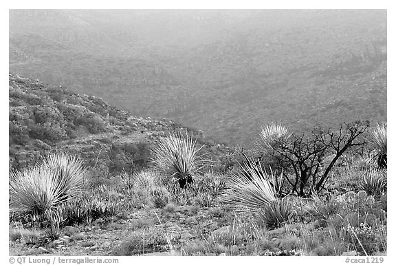 Limestone hills with yuccas, sunset. Carlsbad Caverns National Park (black and white)