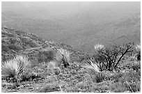 Limestone hills with yuccas, sunset. Carlsbad Caverns National Park, New Mexico, USA. (black and white)