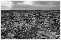 Burned desert vegetation. Carlsbad Caverns National Park ( black and white)