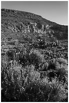 Springtime bloom, Walnut Canyon. Carlsbad Caverns National Park, New Mexico, USA. (black and white)