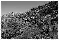Green trees and shurbs below desert slopes. Carlsbad Caverns National Park ( black and white)