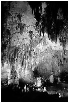 Fine Stalactites growing from ceiling of Papoose Room. Carlsbad Caverns National Park, New Mexico, USA. (black and white)