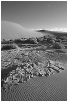 Mud formations in the Mesquite sand dunes, early morning. Death Valley National Park, California, USA. (black and white)