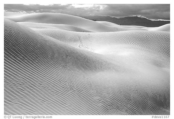 Mesquite Sand Dunes, morning. Death Valley National Park (black and white)