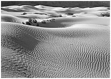 Sand dunes and bushes. Death Valley National Park ( black and white)