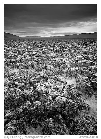 Salt pinnacles at Devils Golf Course. Death Valley National Park (black and white)